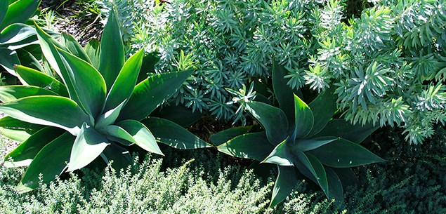How to transform your garden