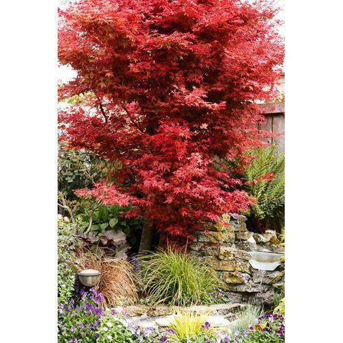 Branch out selecting suitable trees for small gardens for Small trees suitable for small gardens