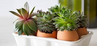 Make your own egg plant pots final