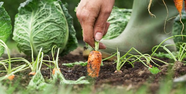tips for planting a winter vegetable garden  now to love, Natural flower