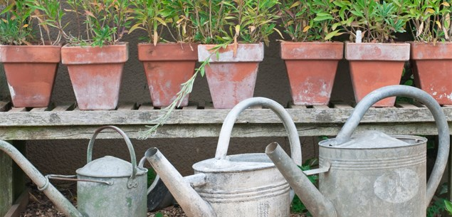 Easy ways to add character to your garden