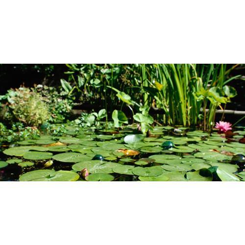Creating A Garden Pond New Zealand Women S Weekly