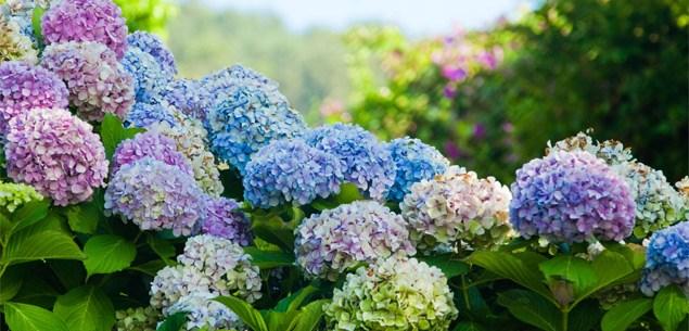 Adding colour to your garden