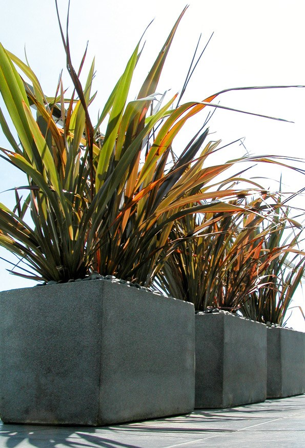 These flaxes look bold and dramatic in a set of three square containers.