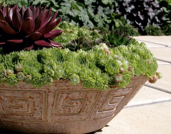 You needn't limit yourself to one variety – companion planting in containers gives you a mini-garden.