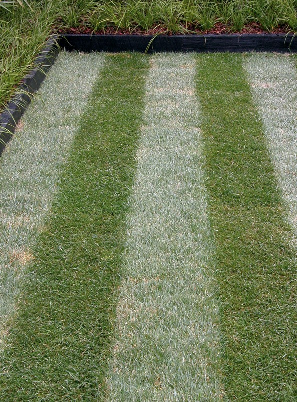 This striped area is created by sowing two types of grass