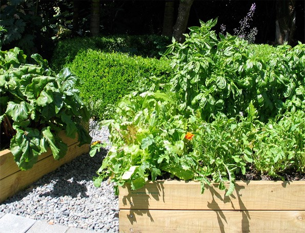 The trend towards living more healthily and sustainably by growing your own food is set to expand in 2013 – better get a new raised bed, then.