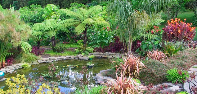 Tips for planting a subtropical garden