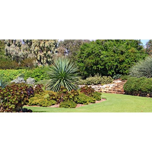 Tips for planting a drought resistant garden now to love - Tips for a lovely garden ...