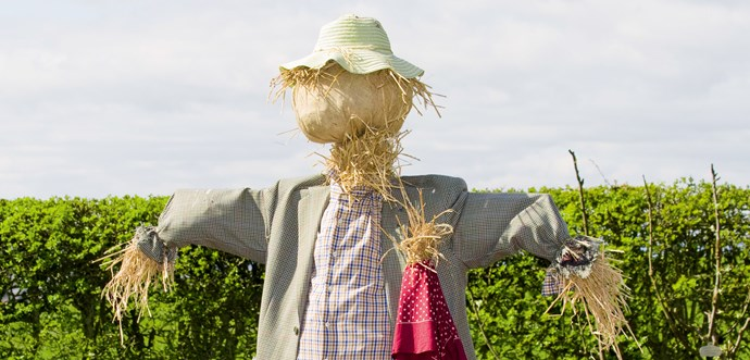 Scarecrow's in the garden
