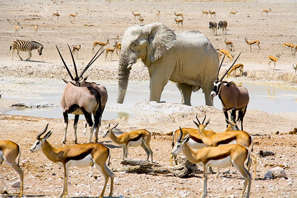 The waterholes teem with wildlife seeking respite from the drought.