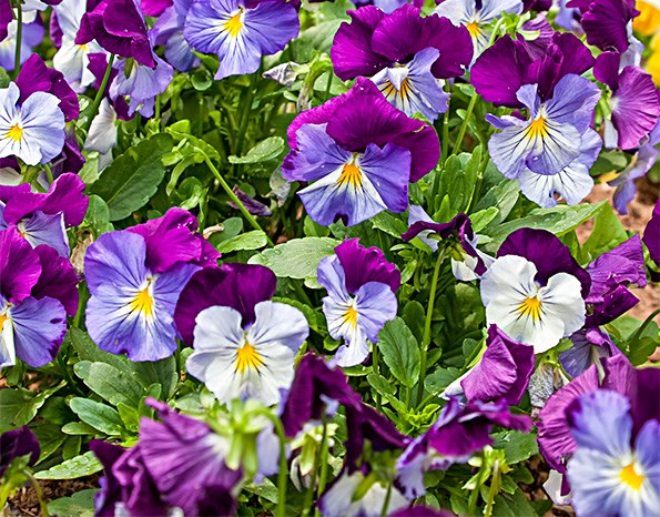Now's the time to plant flowers, many of which will bloom in winter.
