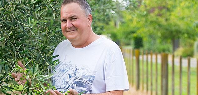 Simon Gault's olive harvest
