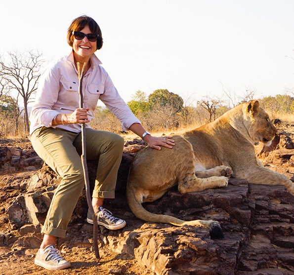 Judy Bailey with a lioness  Photo: Chris Bailey