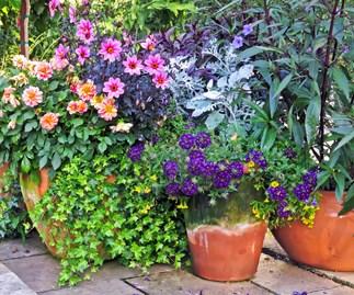 Potting plant privileges