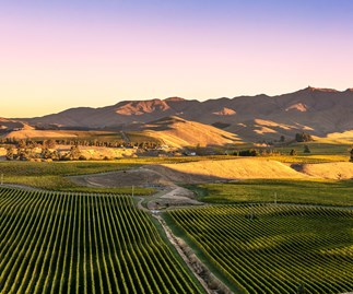 St Clair vineyard, Blenheim, New Zealand