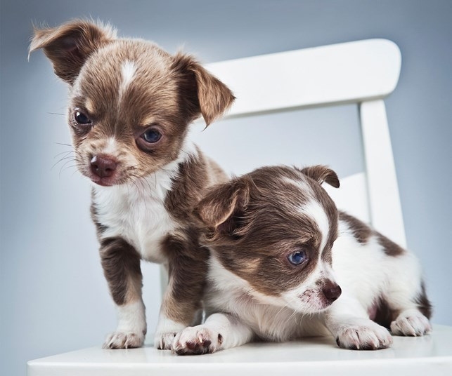 Naughty puppies.