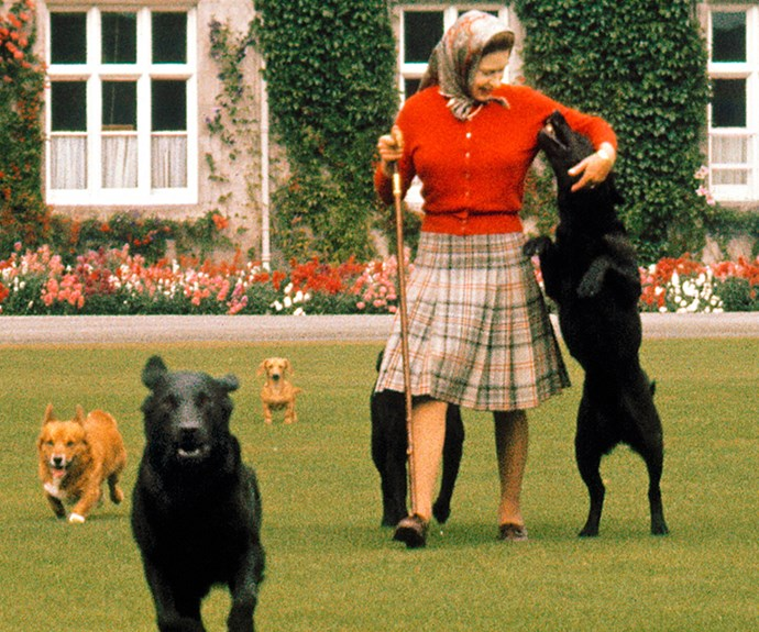 The Queen's Dogs