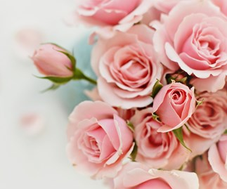 How to grow perfect roses this November