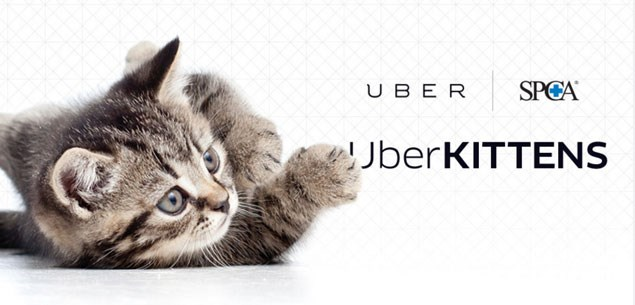 Uber service is the cat's whiskers