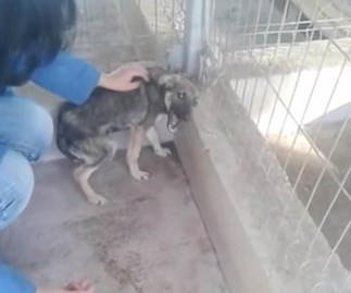 Heartbreaking: Abused dog cowers in fear when shown affection