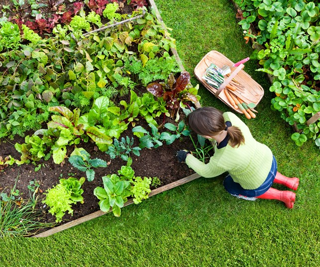 How to: Grow your own veges this winter