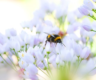 Help the bees and get a summer garden at the same time