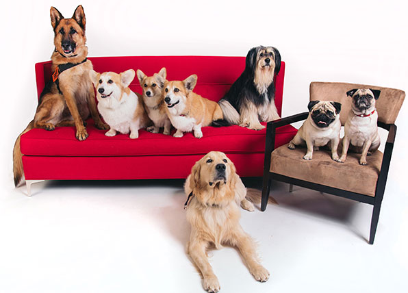The dogs of Netflix