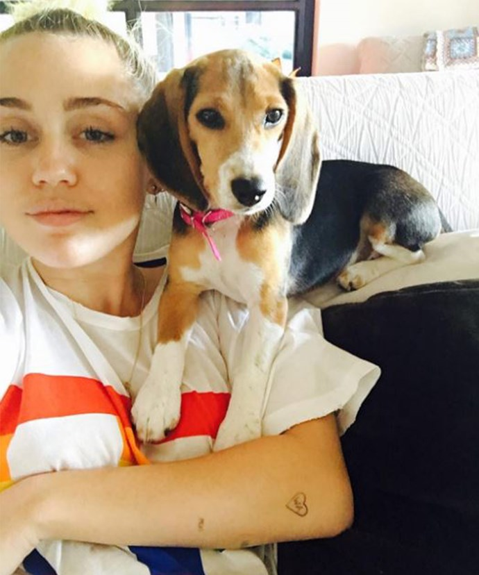 To the family miley cyrus and liam hemsworth adopt a new puppy