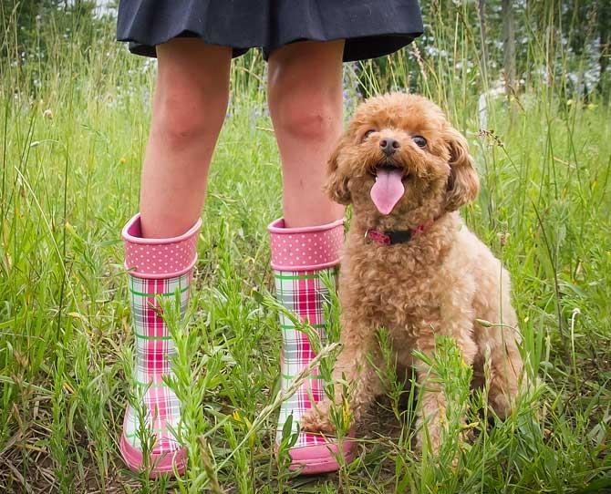 ***POODLE***  Originally used as an aid for duck hunters in France, the poodle (standard or miniature) has become a fave among allergy sufferers, too. A poodle has tight, curly locks that don't easily shed, and this in turn retains the dander.