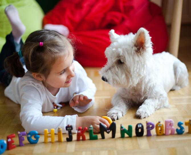 ***WEST HIGHLAND TERRIER***  Dog breeding sites describe the Westy as active, hardy, alert, friendly, independent, courageous – and then you can add to that honours list 'hypoallergenic'.  It also scores four stars on the 'good with kids' category on the Dogs Breeds List site.
