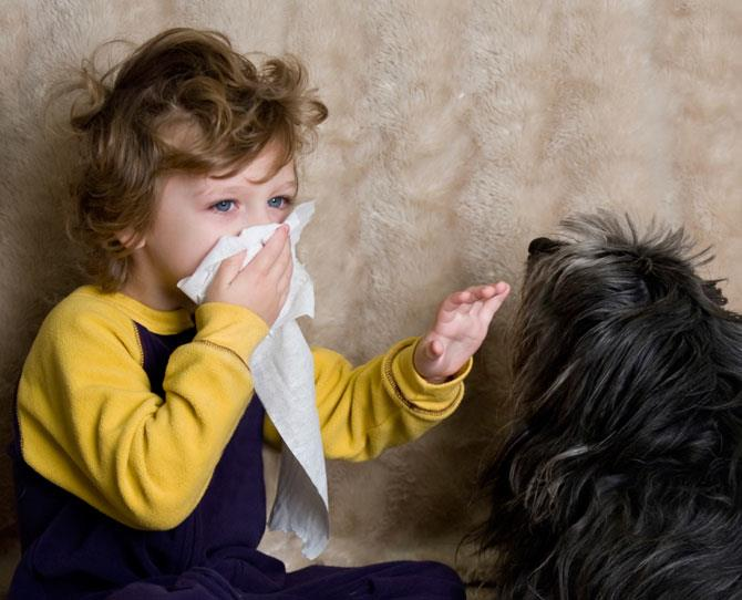 ***ARE YOU ALLERGIC?***  The symptoms of dog allergies are like those of any other inhalation allergy or cold. They include: • coughing, wheezing and sneezing • red, itchy, puffy eyes • runny, itchy, stuffy nose • headache • skin reactions, such as rashes and hives from dog  licks, or hives on face or chest.