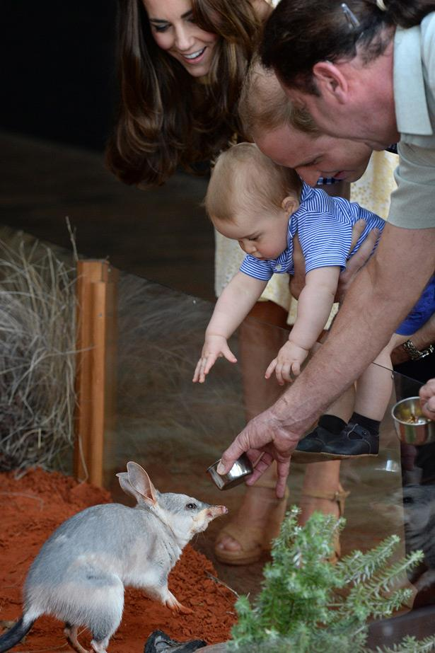 Baby Prince George meets an Easter Bilby also named George at Sydney's Taronga Zoo on Easter Sunday.