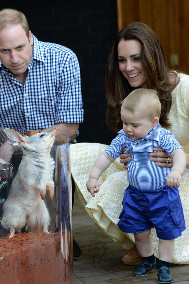 George the Easter Bilby is just as intrigued in his new royal friend.