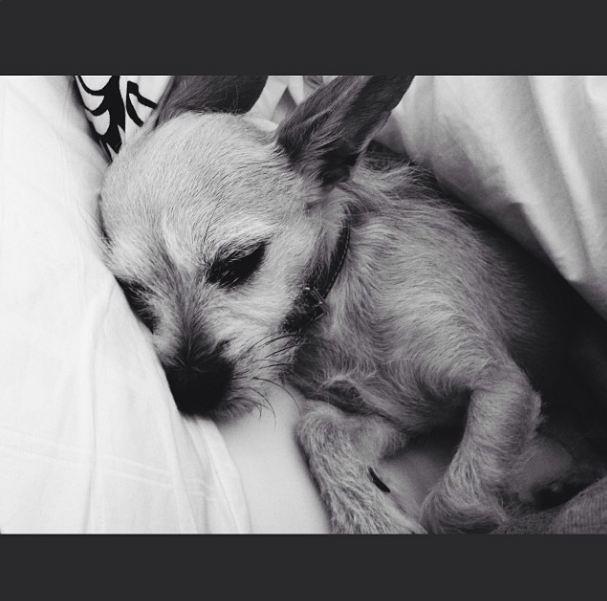 Actress Chloe Grace Moretz' dog Missy.