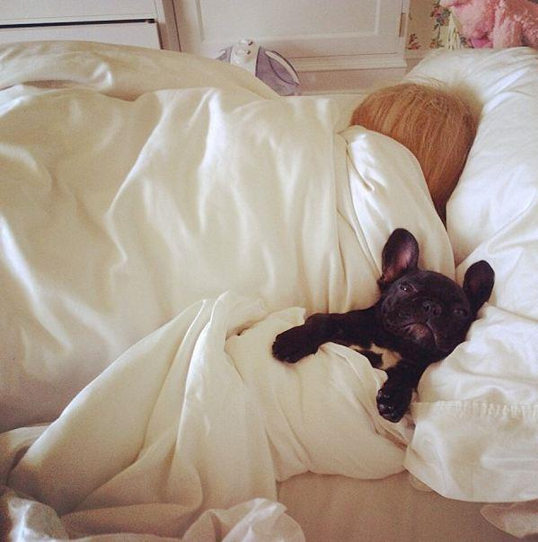 Lady Gaga's French Bulldog, Asia, snuggles up to her Queen Monster.