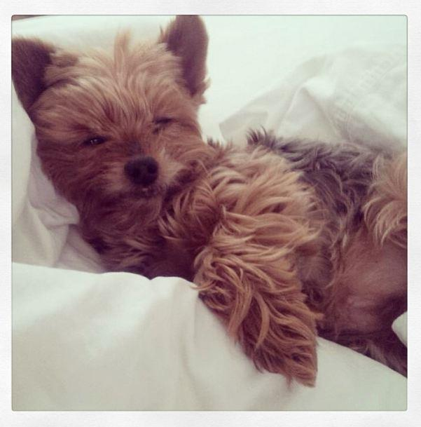 Miranda Kerr's Yorkshire Terrier, Frankie, is probably the luckiest dog in the world, and potentially the cutest.