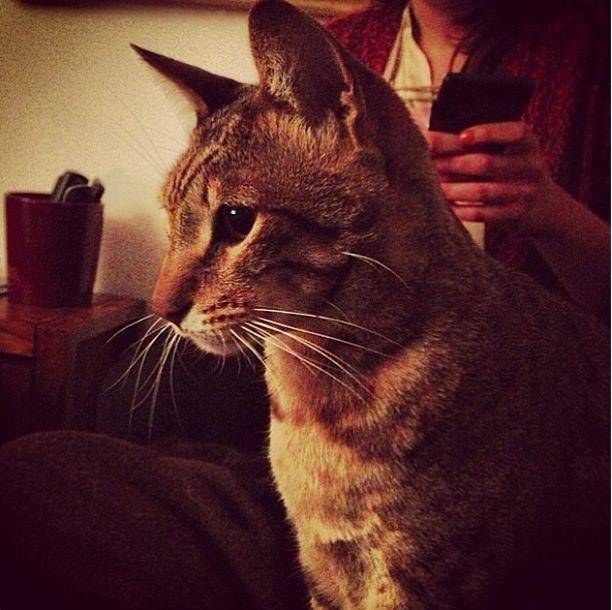 Rita Ora's elegant kitty, Bruno, may or may not have been named after ex-boyfriend Bruno Mars.
