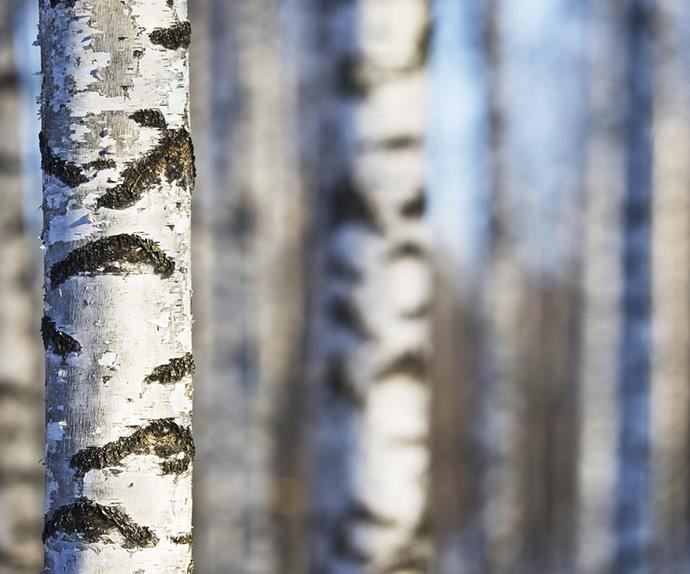 Birch sap