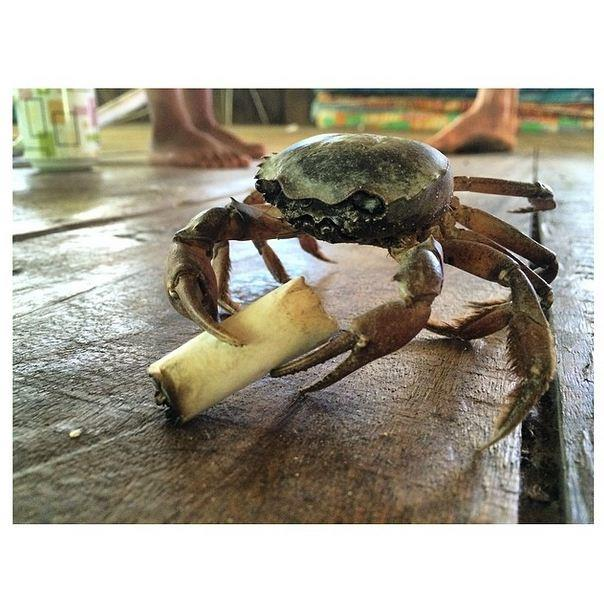 "<strong>""#smokingcrab"" <br><br> Instagram: @dotwillow </strong>  </strong>"