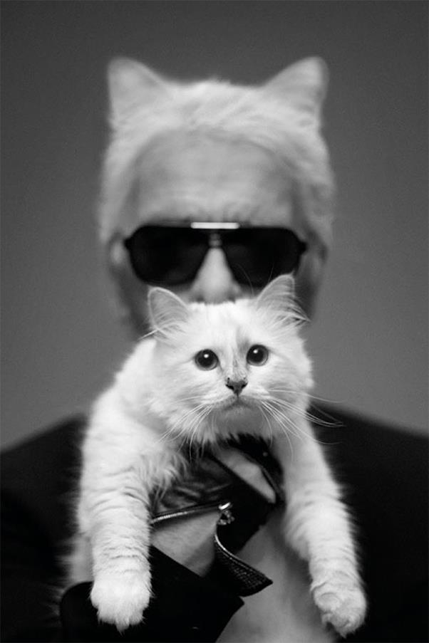 """<strong>On Choupette:</strong> <br><br>""""She has two maids, and the driver takes care of her too. She has an attitude like a princess."""" - Harper's BAZAAR"""