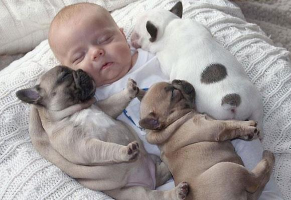 A pet is for life!  As photos of Austin snuggled with his adorable baby French Bulldog caused the internet to meltdown with collective sighs of 'Awwwww', kids everywhere will be jumping up and down begging for their very own 'Frenchie'.   But how do you really know whether a particular breed of dog is right for your brood? See our gallery on Hypoallergenic Dog Breeds and Best Dog for Babies. Photo courtesy www.lovablefrenchies.com