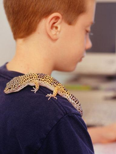 Teenagers: Reptiles  If you are being pestered for a new pet when your kids are teenagers, remember that they are likely to move out within the next 10 years, so if you don't want to be looking after their pets after they have gone, get one that they can take with them.