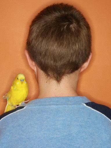 Teenagers: Birds  A budgie or parrot can brighten up the life of a studious teenager.  Although getting them to clean their messy cages can be tricky.