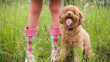 10 hypoallergenic dogs for allergy sufferers
