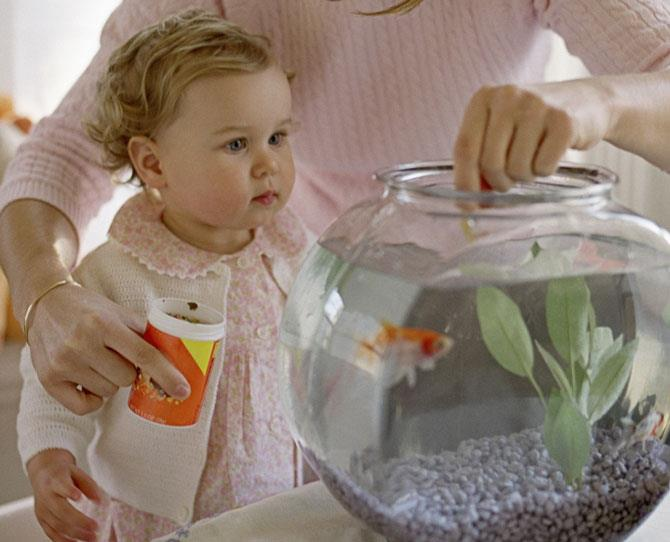 Babies & Toddlers: Fish  Quiet, odourless (if bowl kept clean), allergy free and fish are the least expensive pets to buy and feed. They are also excellent pets if your family is likely to holiday away from the home a lot.   Not at all good however for cuddles or any great interaction with your kids, but they will certainly entertain and keep kids busy feeding and cleaning.