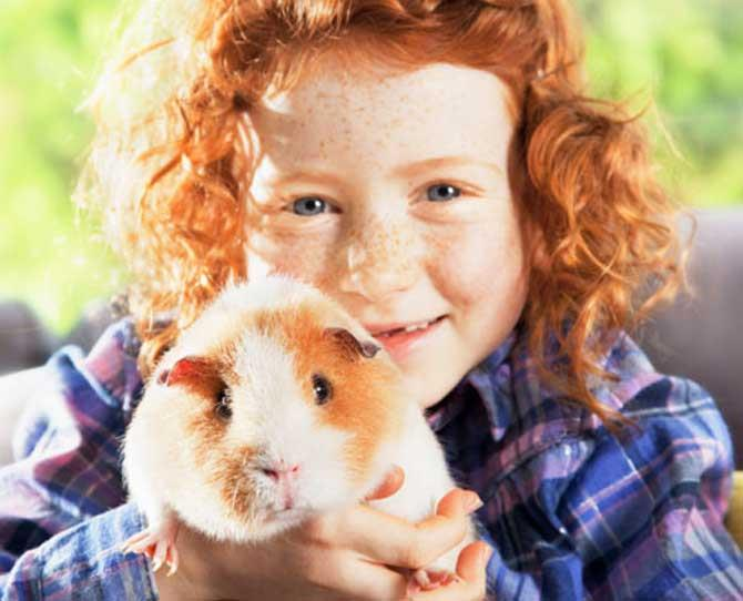 Primary School: Guinea Pigs  Their relative ease of caring for them and their docile nature makes the guinea pig a popular pet.   Remember, if you have a dog they can be quite fascinate by guinea pigs and so a sturdy cage is a must.