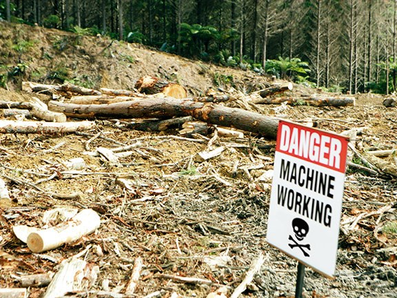 Troubled times ahead for loggers