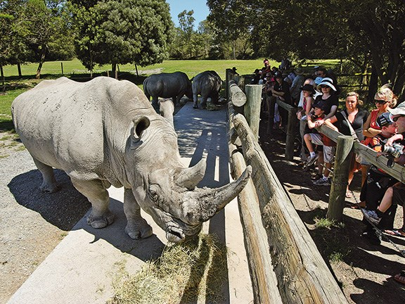 Orana Wildlife Park in Christchurch