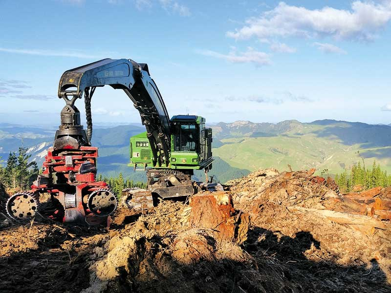 Business profile: Cox Forestry Services